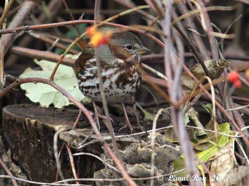 Des oiseaux sur ma route de ma fen tre for Fenetre a cardinal