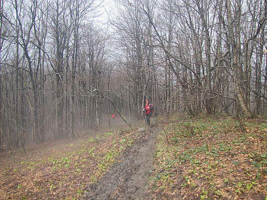 Wejście do bukowego lasu z domieszką jawora.