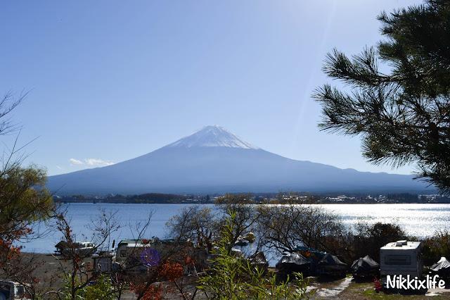 【日本。河口湖】紅葉回廊:觀賞紅葉和富士山的好地點! 12