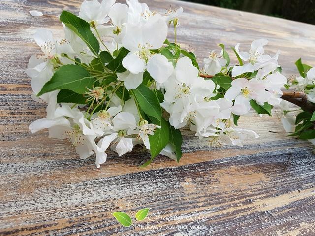 fiore su top di tavolo stile shabby