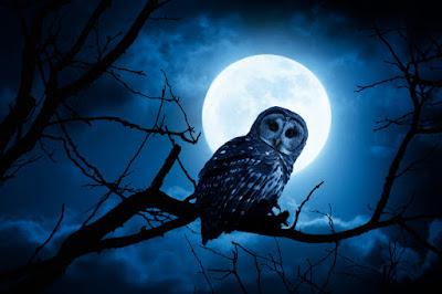 burung hantu malam