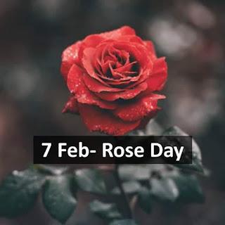 7th Feb - Rose Day