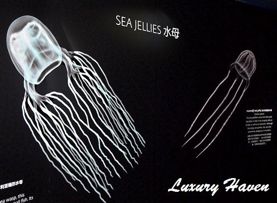 rws marine life park sea jellies