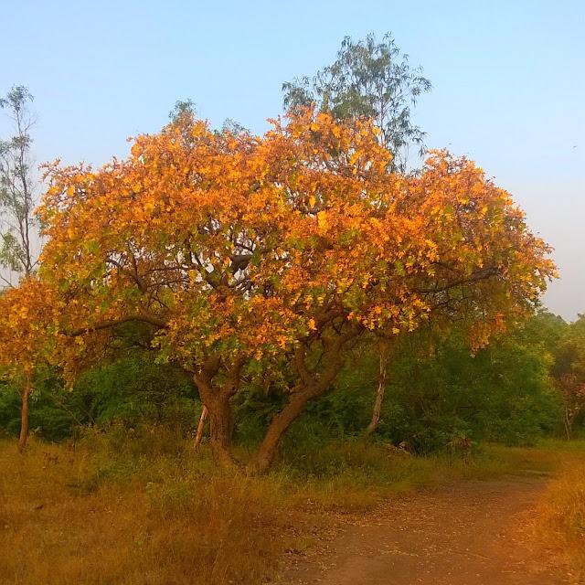 Salai, Pune, Tekdi