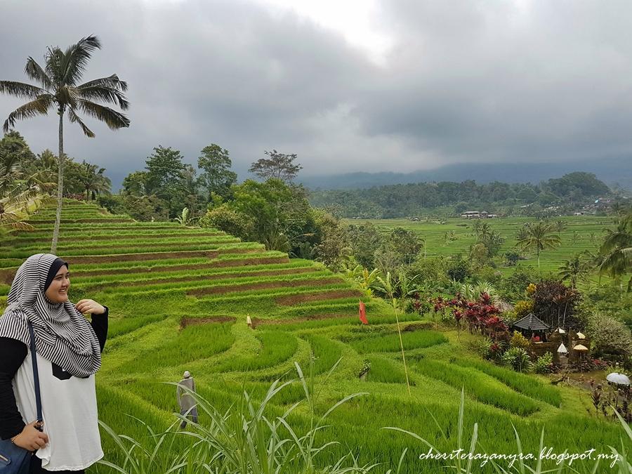 cheritera kami bercuti ke bali jatiluwih rice terrace