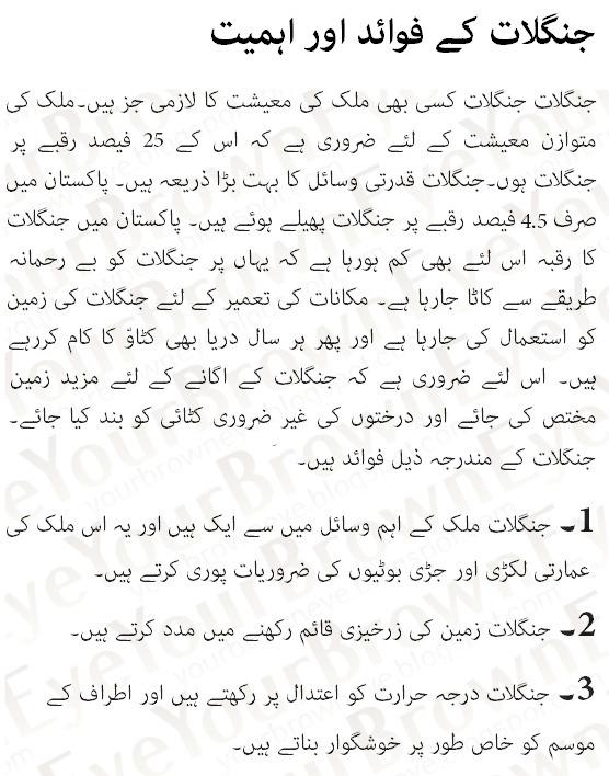 essay on importance of english in pakistan  english essay