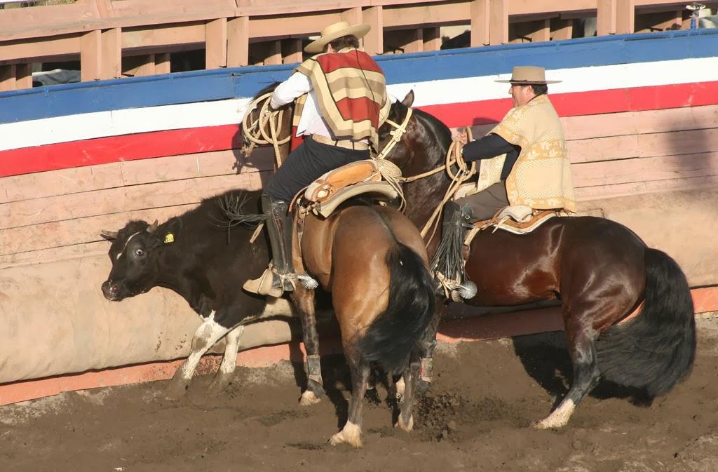 Primer Rodeo Oficial En Curepto Competencia