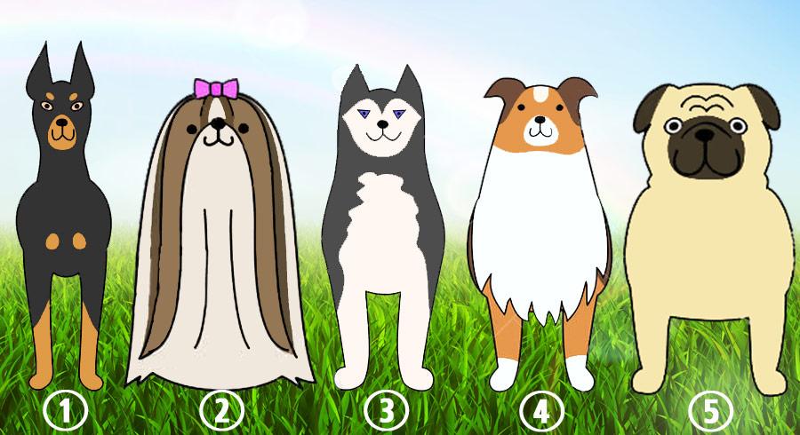 Test: ¿Cuál  perrito piensas que es más fiel? Tu elección revelará qué valores crees más  importantes para ti.