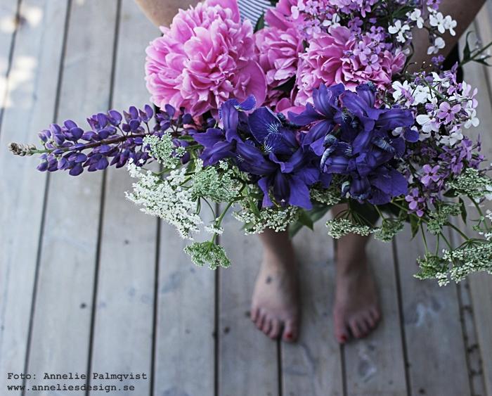 pion, pioner, blommor från trädgården, trädgård, växter, rosa, lila, vit, vita, vitt, hundkex, lupiner, bukett, buketter, sommar,