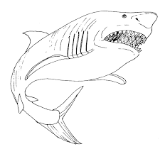Angry Megalodon Sharks Coloring Pages Animals