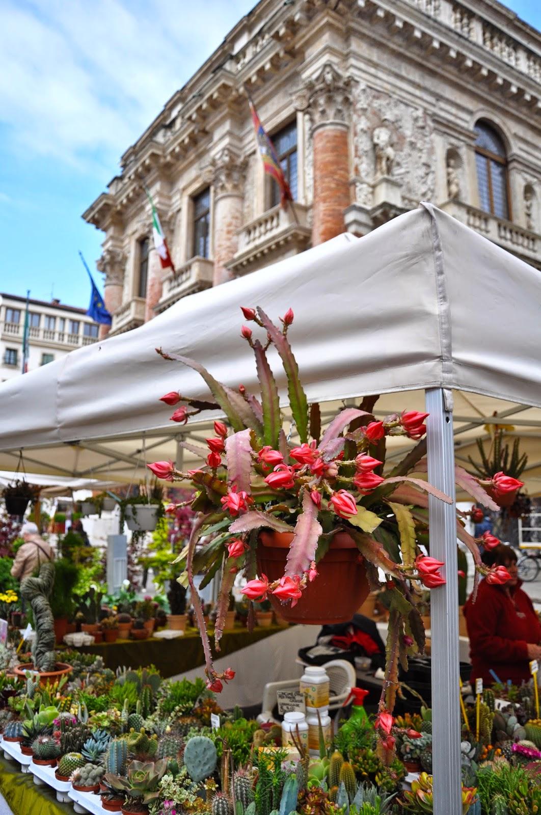A cacti stall, 7th Edition of 'Fiori, colori, e...' - Floriculture market show, Vicenza, Italy