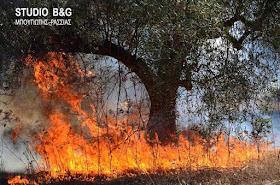 Αργολίδα: Μεγάλη πυρκαγιά στην Ερμιονίδα