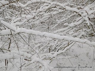 Snowy branches at Charnwood Water Loughborough