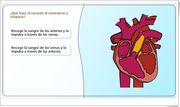 """""""Funcionamiento del corazón"""" (Juego de Ciencias Naturales de Primaria)"""