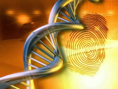 DNA fingerprints
