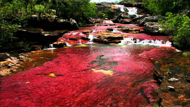River of Five Colors in mountains of Colombia