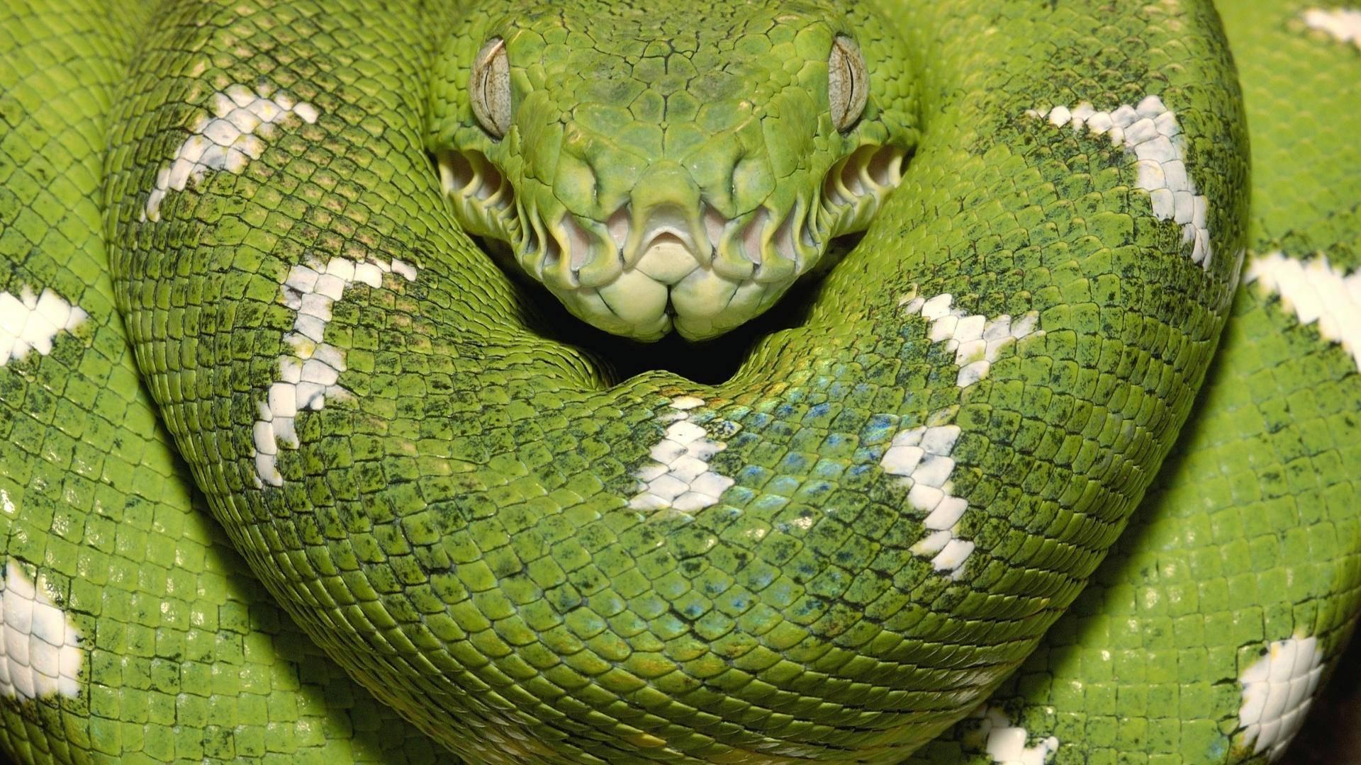 Snake hd wallpapers - Green snake hd wallpaper ...