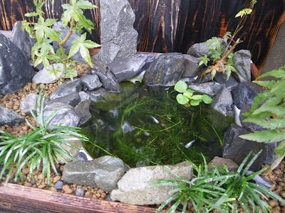 メダカ盆栽 雨水