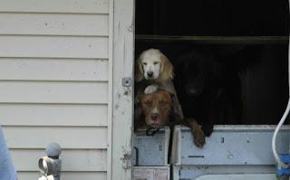 Un plan de emergencia para mascotas: el aniversario del huracán Katrina