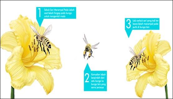 Perkembangbiakan secara generatif pada flora berlangsung melalui  Macam Macam Penyerbukan beserta Gambarnya [Lengkap]