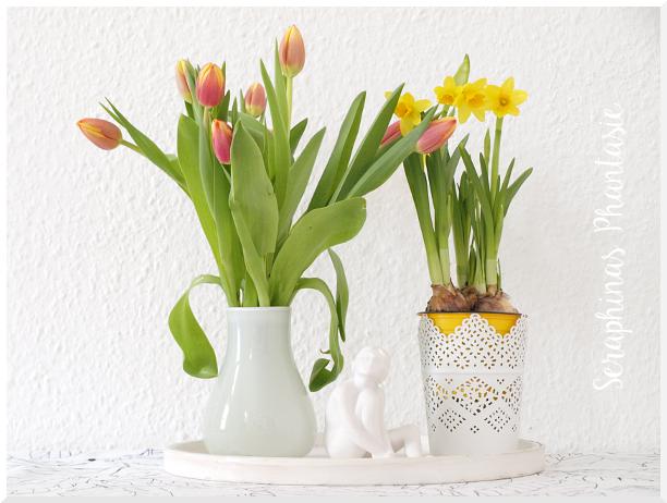 seraphina s phantasie tulpen und narzissen. Black Bedroom Furniture Sets. Home Design Ideas