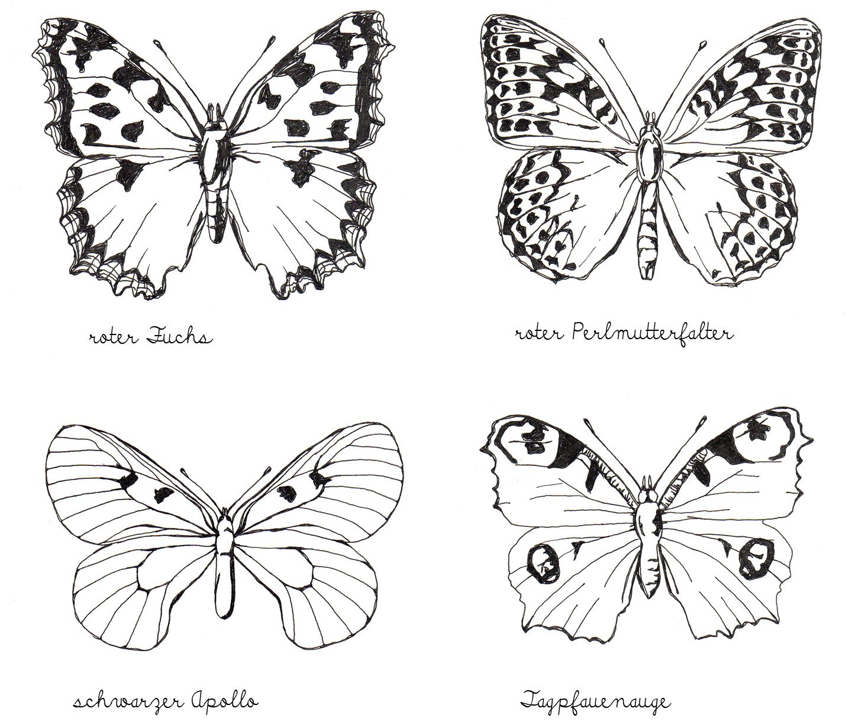 Alessas Blog Illustration Tagfalter