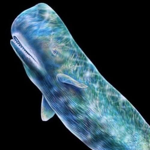 06-Sperm-Whale-Tim-Jeffs-www-designstack-co