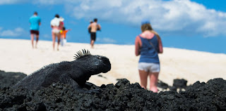 Intenet, cable and cellular services in Galapagos