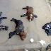 Ανείπωτη φρίκη 4 κουτάβια βρέθηκαν κολλήμένα στο έδαφος πασαλειμμένα με πίσσα