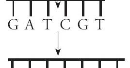 Pengertian dan Contoh Mutasi Frame Shift (Pergeseran