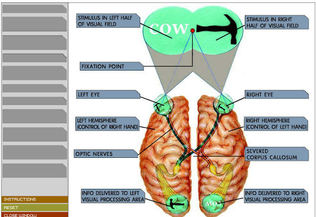 Screenshots of three visual input modality components: face ...