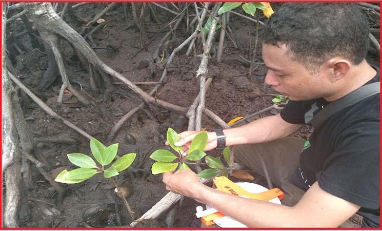 Pengertian Inventarisasi Sumber daya Hutan