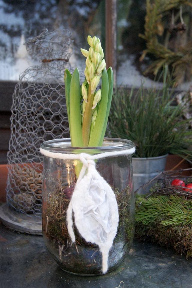 Weckglas mit Hyazinthe und Filzschnur
