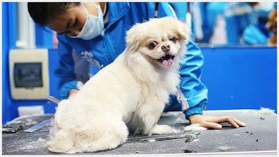 Dịch vụ tắm-tỉa lông cho thú cưng
