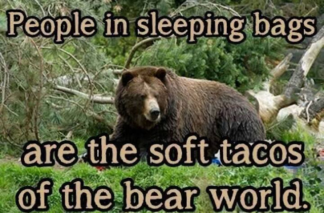 Funny quote about camping where there's bears.