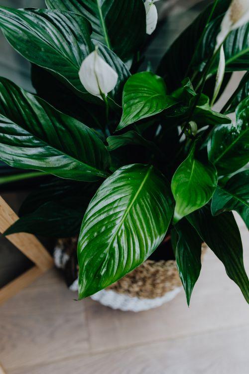 żywe rośliny we wnętrzu