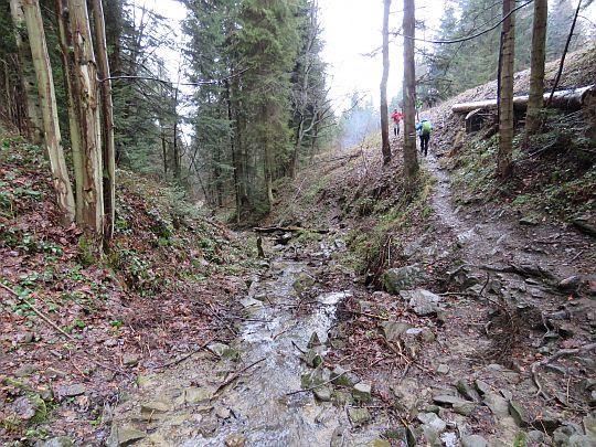 Ścieżka wyprowadzająca na leśną drogę.