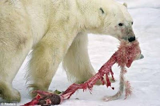 Apa Makanan Hewan Beruang?