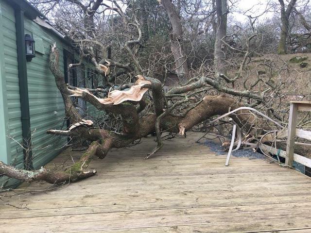 fallen oak on deck