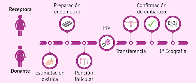 Ciclos de reproducción asistida: Ovodonación (OVO)