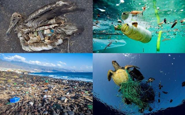 Impactos del plástico