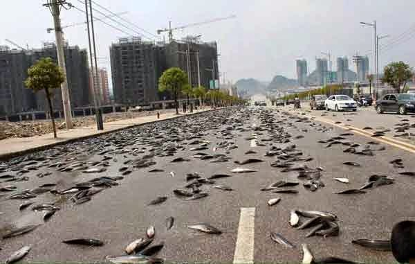 6,800 Kilos of Fish Spilled Onto China Road