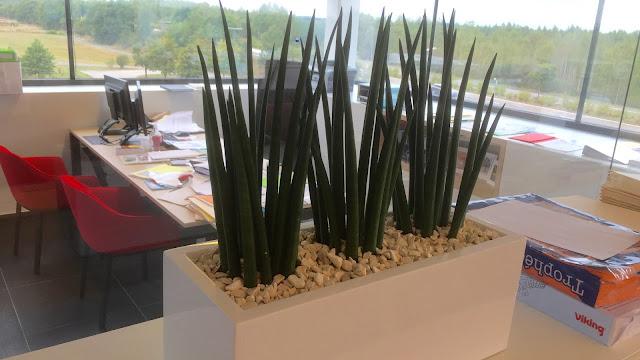 Planten voor landschapskantoor op kast die zuurstof geven of luchtzuiverend werken in kantoorruimte vergaderzalen met weinig licht of zonlicht en dus tegen donker kunnen of donker kunnen staan