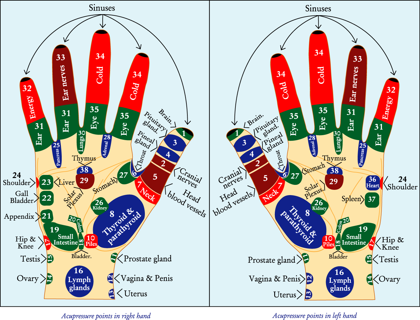 acupressure diagram of pressure points commando alarm wiring cure without medicine march 2013