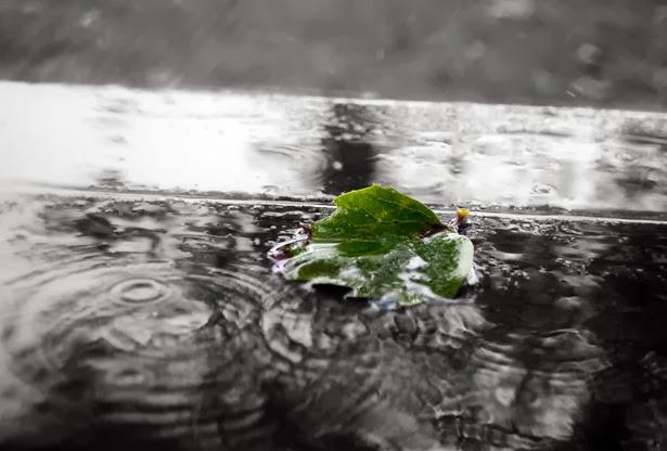 Nakładam Szkła Wiersz Zaplątany Zimą W Letni Deszcz