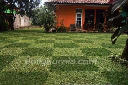 DIY Membuat rumput taman lapangan bola
