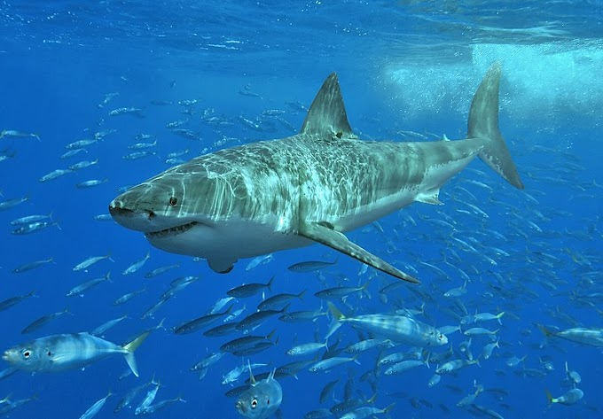 The most surprising facts about sharks