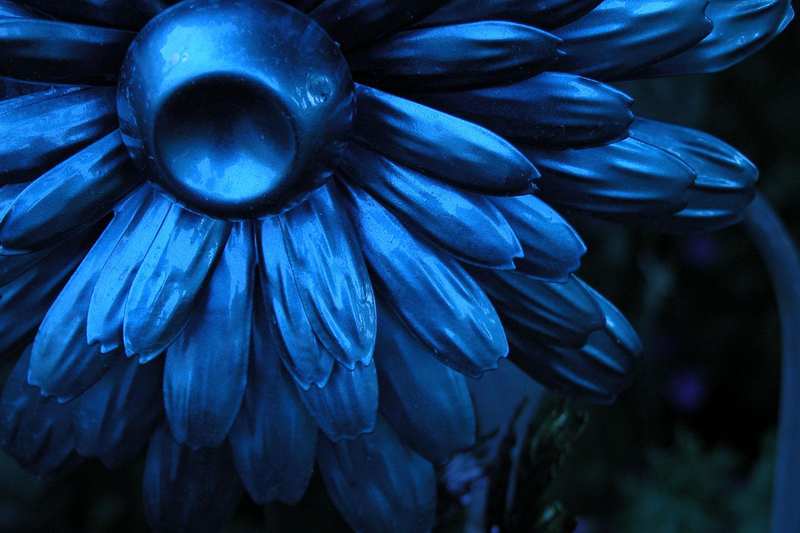 Monochromatic Paintings Of Flowers