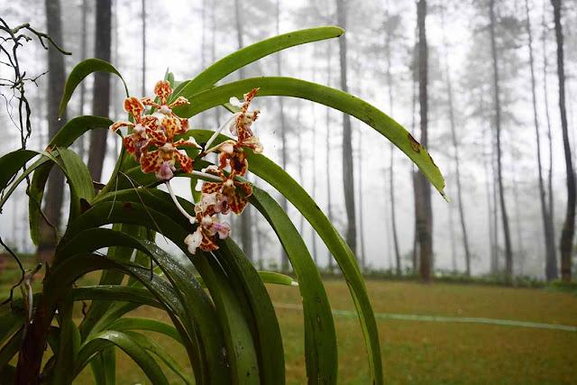 ORCHID FOREST CIKOLE | Tempat Outbound di Lembang