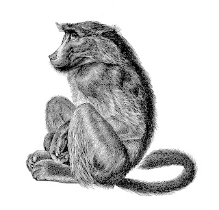 monkey baboon image illustration download